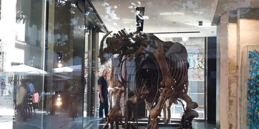 دار درو للمزادات قدرت قيمة البقايا المتحجرة للهيكل العظمي لهذا الديناصور ما بين 1.2 و1.5 مليون يورو