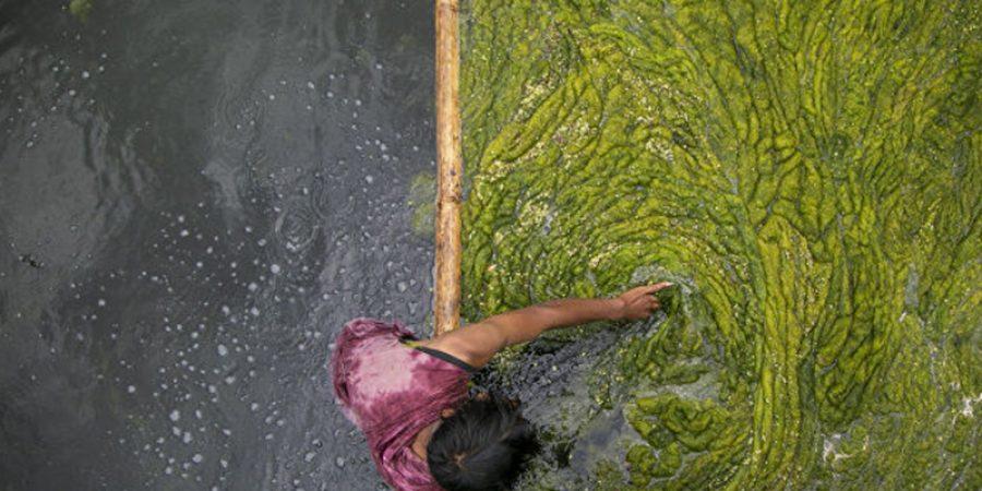 عامل نيبالي ينظف الطحالب في بركة كمال بوخاري في كاتماندو